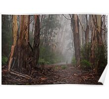 Giants In The Mist - Mount Wilson NSW Australia - The HDR Experience Poster