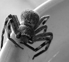 _Spider_ 3 by xTRIGx