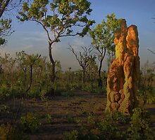 Termite Mound - Northern Territory AUS by JimFilmer