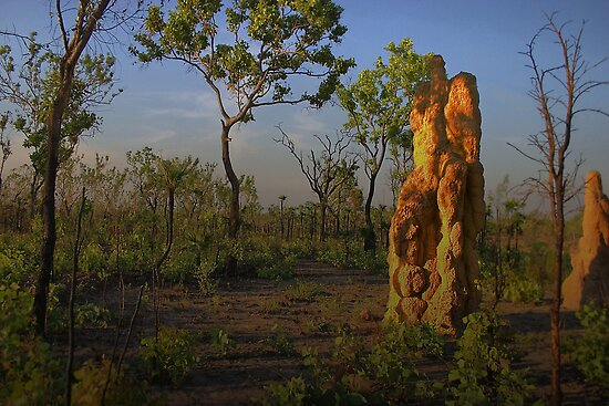 Termite Mound - Northern Territory AUS by JimFilmer
