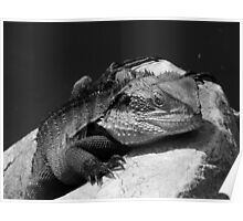 Water Dragon in Black & White Poster