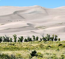 #529    Great Sand Dunes Of Colorado by MyInnereyeMike