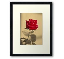 Red Rose Flower Isolated on Sepia Background Framed Print