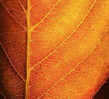 Orange Leaf by Ross Jardine