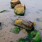 low tide rocks! by Russell Harris
