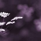 white on violet  by Victor Bezrukov