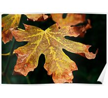 Leaf in autumn. Poster