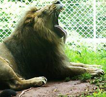 King ! by Tara Leigh