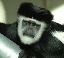 Sad monkey by Stan Daniels