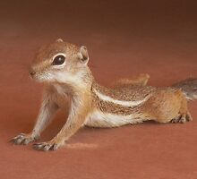 """Yoga Chipmonk"" by Susan Bergstrom"