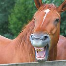 Horse humour........ by jdmphotography