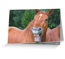Horse humour........ Greeting Card