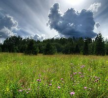 Sunlit Meadow by Martins Blumbergs