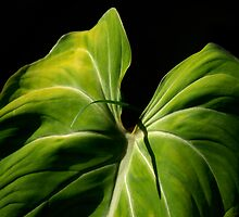 On Friendship:  Liannes Leaf... Kauai Sensual Series by linaji