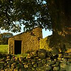 Yorkshire Dales dry-stone wall and tree by newbeltane