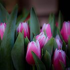 Pink Tulips by Sue Morgan