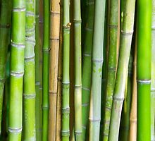 Bamboo Background by ccaetano