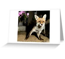 Paparazzi Snap Fox!  Greeting Card