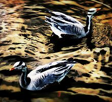 Bar-Headed Geese by A90Six