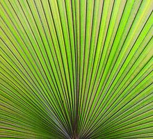 Palm Leaf by A90Six
