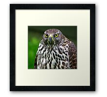 Falcon #1 Framed Print