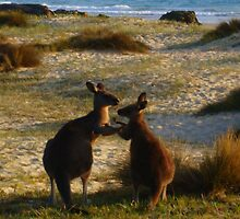 Kangaroos times two by Of Land & Ocean - Samantha Goode