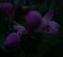 Orchid 1-3 by beeden