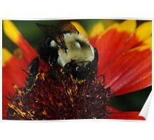 Bee Macro Poster