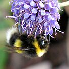 Bumble Bee by Loch Ness by jacqi