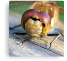 Common Darter dragonfly at Martin Mere up close and personal Canvas Print