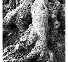 Gnarled Roots by PhotoArtBy Astrid
