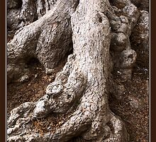 Gnarled by PhotoArtBy Astrid