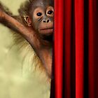 Baby Orangutan by Sue  Cullumber