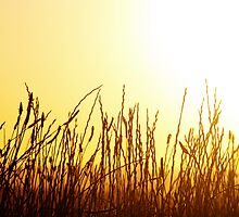 Sunset Grass by Wanagi Zable-Andrews