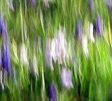 Spring Garden by Kitsmumma