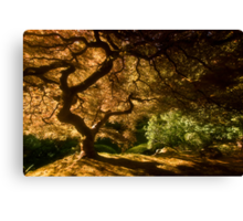 Shadows of Eden I Canvas Print