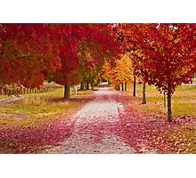 Bright Red Path  Photographic Print