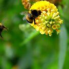 Bee #4 by Trevor Kersley