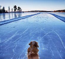 On ice by LadyFi