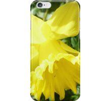 *Lovely Daffodil in the garden* iPhone Case/Skin