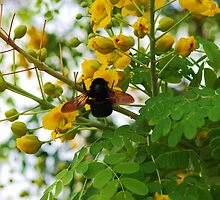 Busy Bee by Lee  Travathan