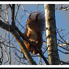 Even another squirrel by magnemyhren