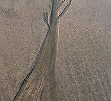 Sand Tree by Jeannette Sheehy