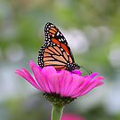Flower and Butterfly Beauty by Deborah  Benoit