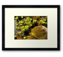 A study of shape and texture Framed Print