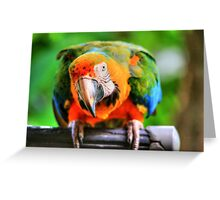 Hybrid Macaw Greeting Card