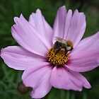 Bee and Cosmos by AnnDixon