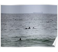 Surfing Dolphins @ Newcastle Poster