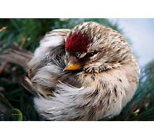 Ball of Feathers Photographic Print