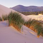 Grass on Dunes by Travis Easton
